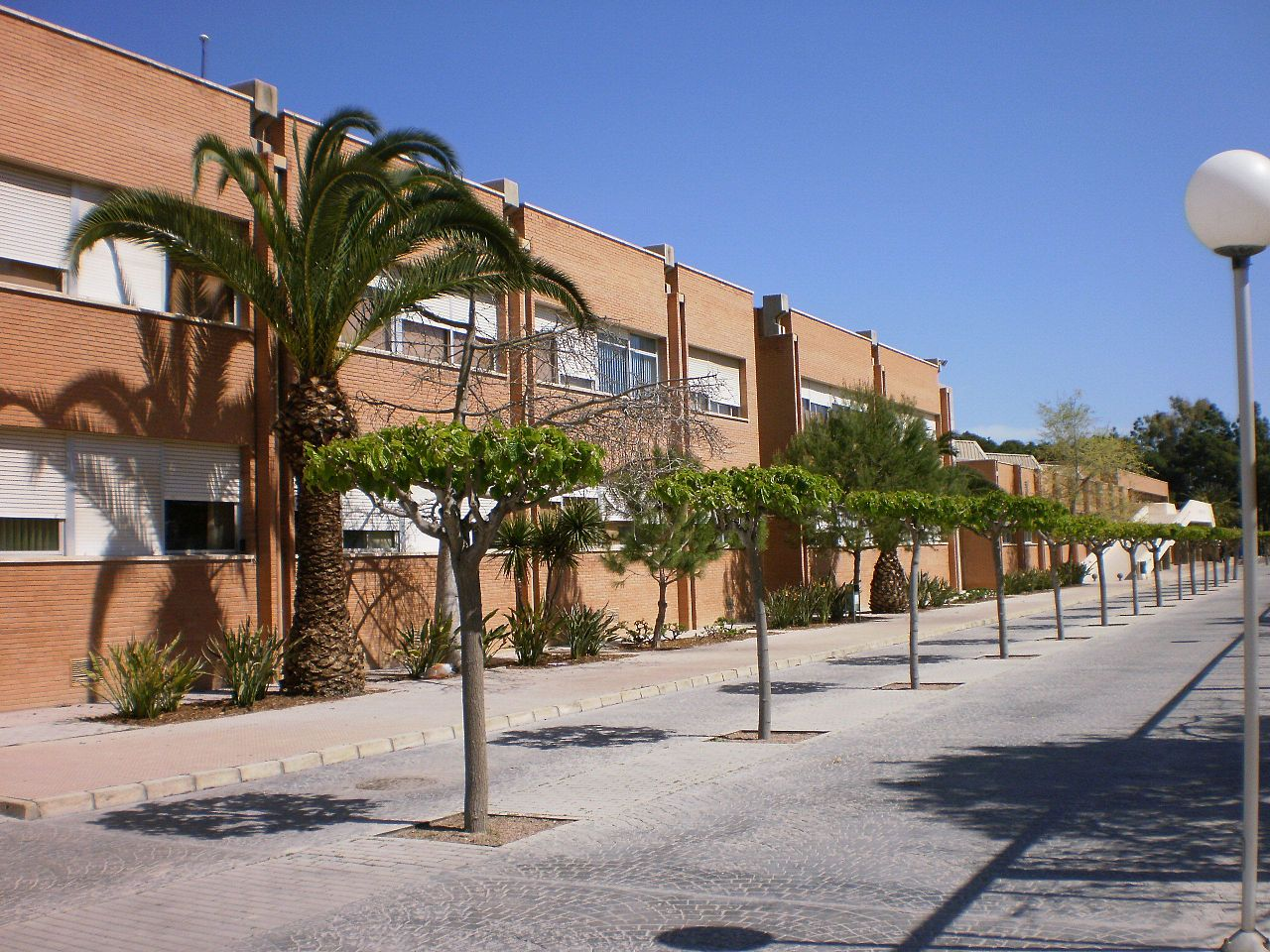 Campus of the University of Alicante 6